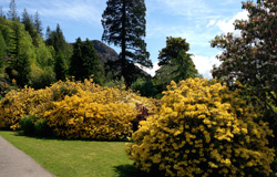 Stunning garden with golden flower bushes