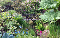 Small Bridge in Attadale Gardens